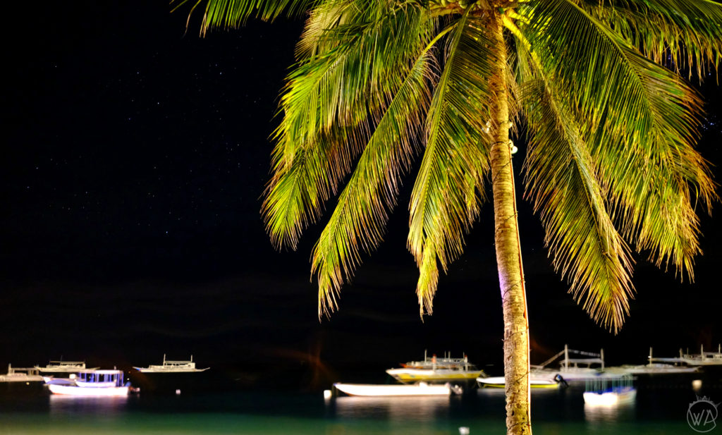 Palm tree in the night Philippines