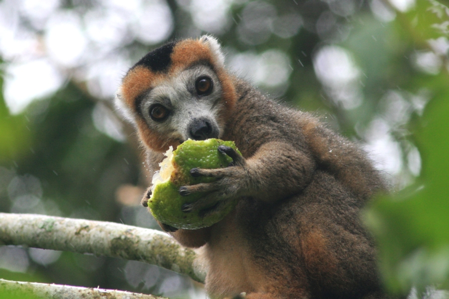 Lemur in Madagascar, non touristy holiday destinations to escape the crowds