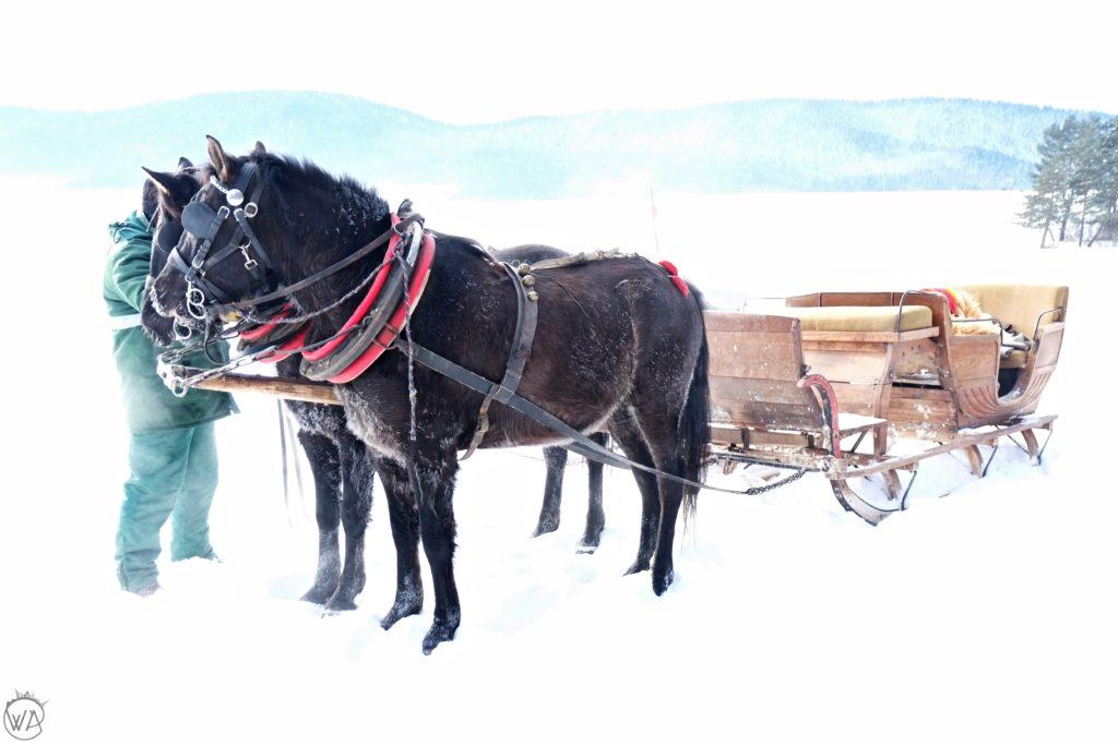 Horses sledge ride