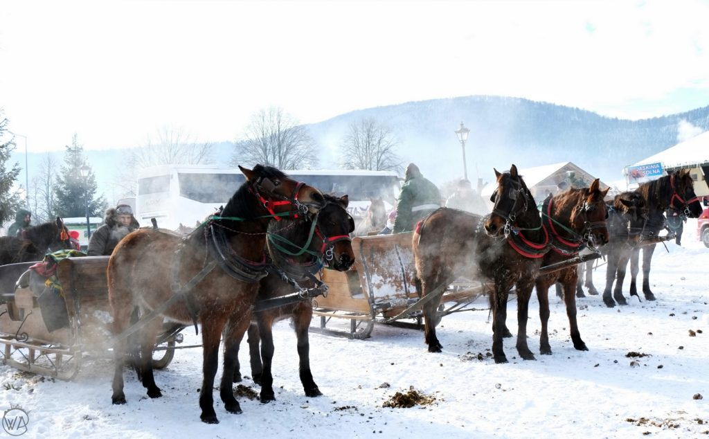 Kulig - horse sleigh drawn ride