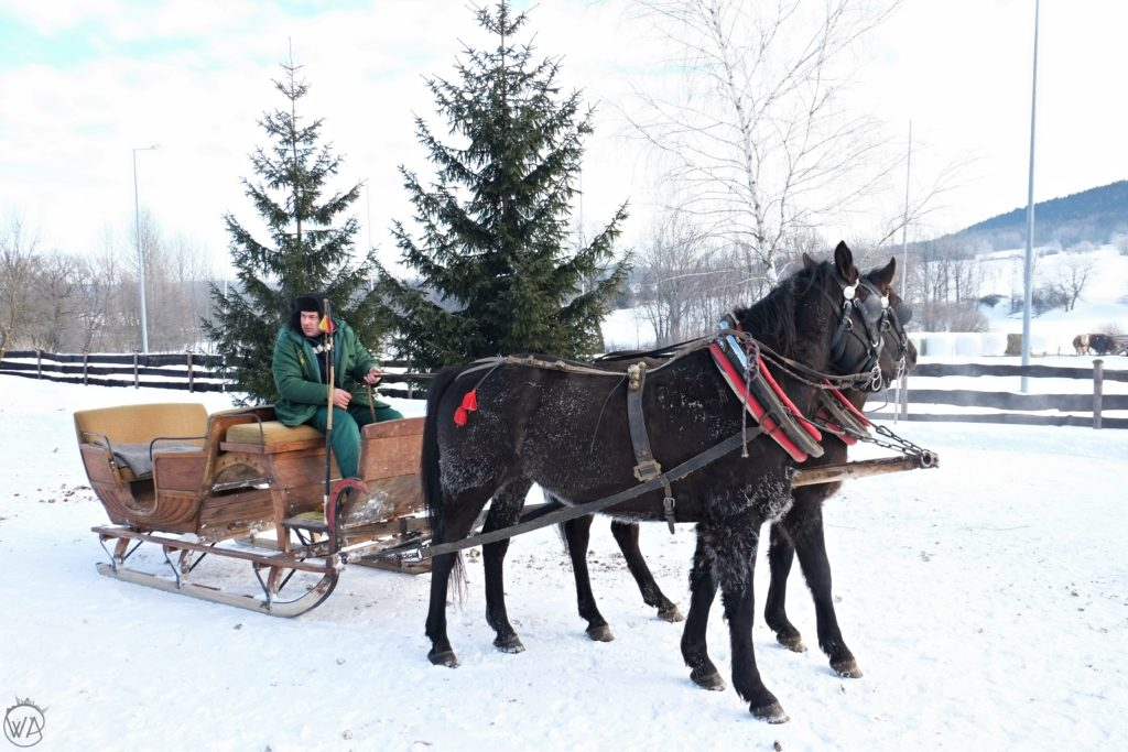 Horse drawn sleigh ride in winter in Poland