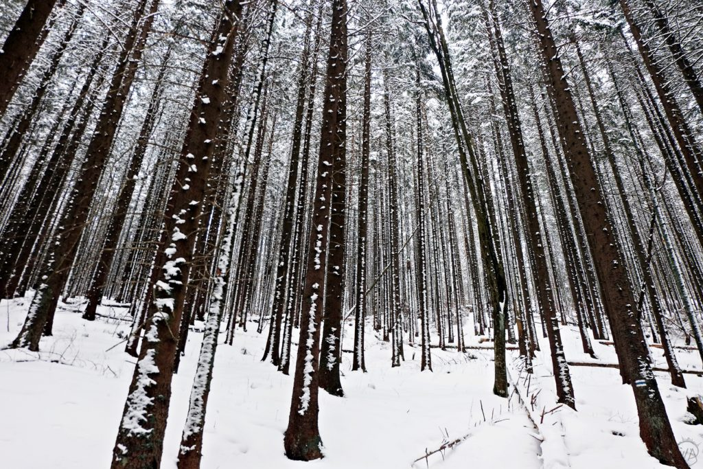 Winter forest in Poland - things to do in Zakopane in winter and Tatra mountains winter hiking