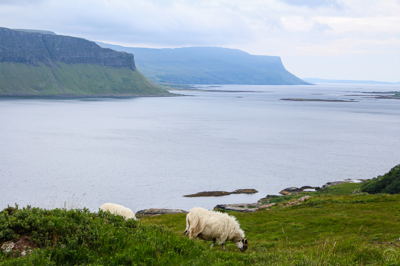 Cliffs and sheep, Isle of Mull