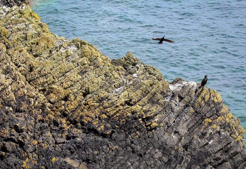 Isle of Staffa birds