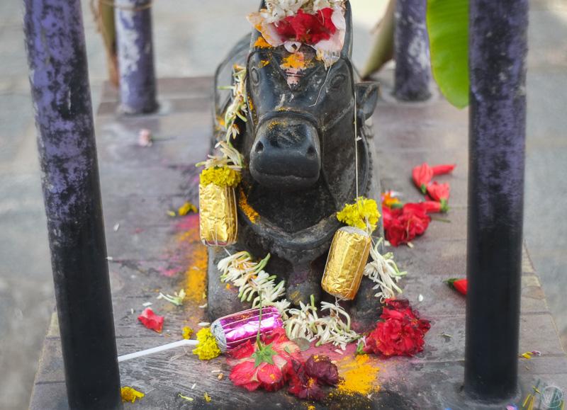 Nandi, Shiva's bull, Belur Halebid