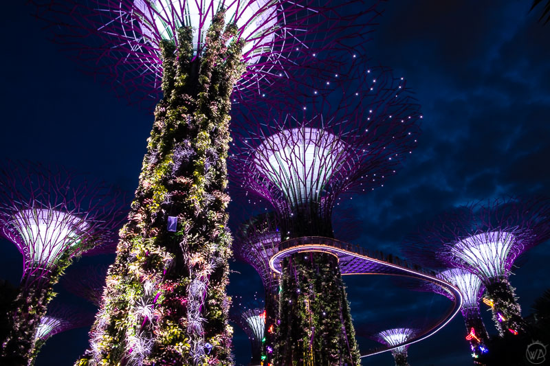 Super trees, Gardens by the bay, Singapore in 24 hours - what to visit in Singapore in a day