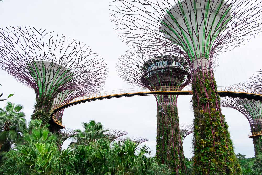 Supertree Grove Gardens by the Bay Singapore during the day