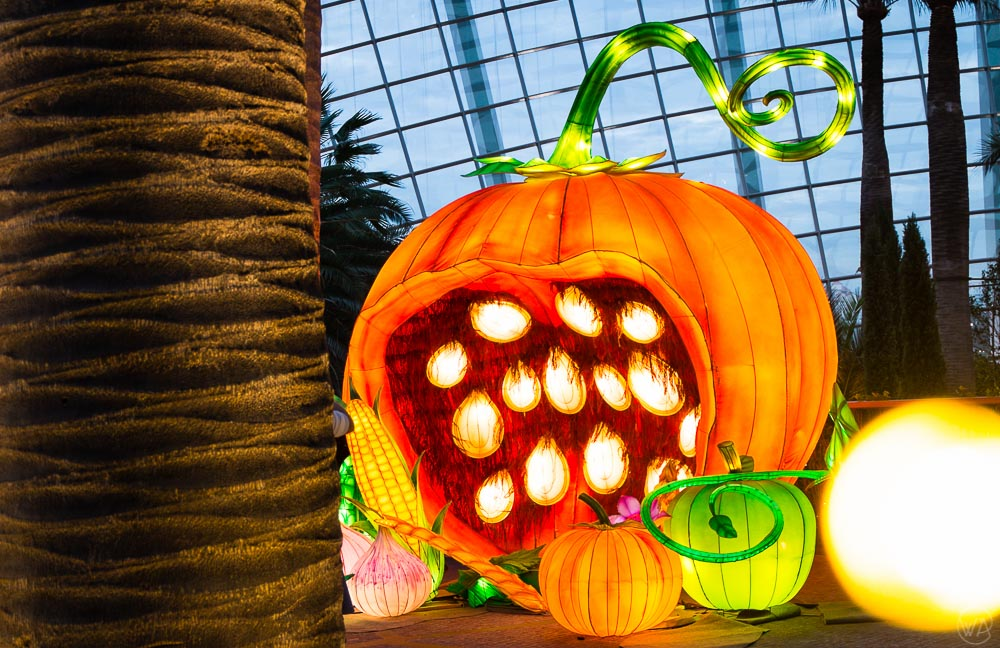 Pumpkin time the Flower Dome in the Gardens by the Bay in Singapore