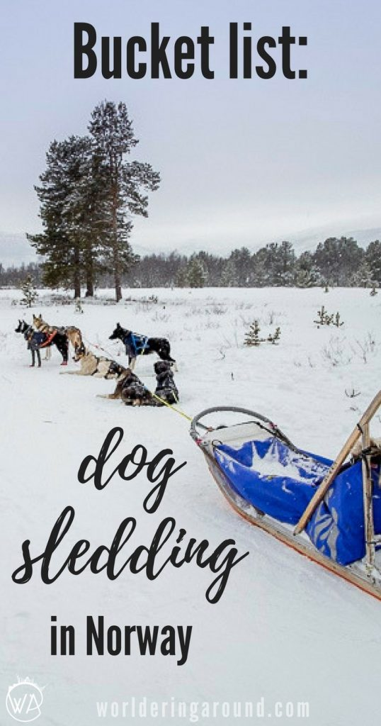 travel bucket list: Dog sledding in Norway - where to try dog sledding to have a happy Husky safari? Norway winter travel, things to do in Norway | Worldering around #Norway #huskysafari #dogsledding
