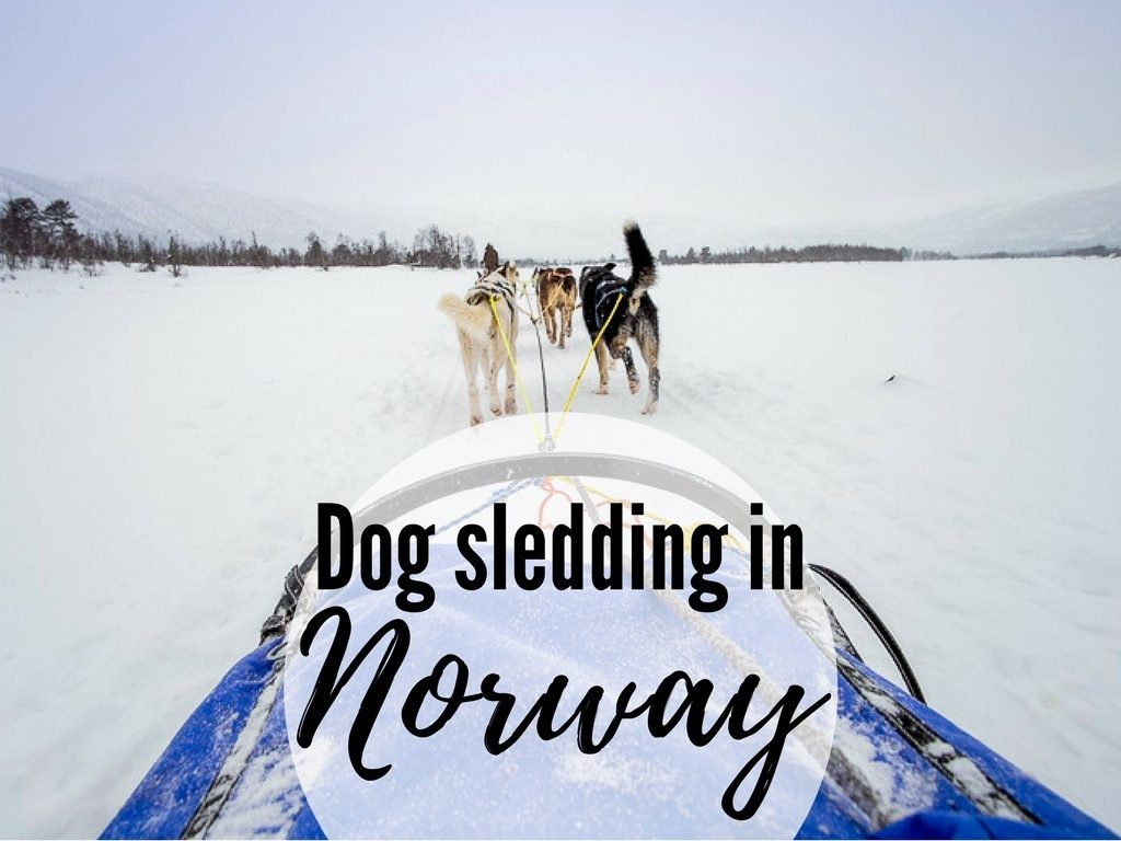dog sledding in Norway