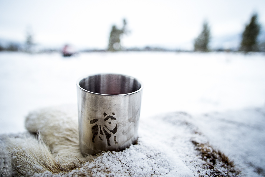dog sledding in Norway, Husky cup