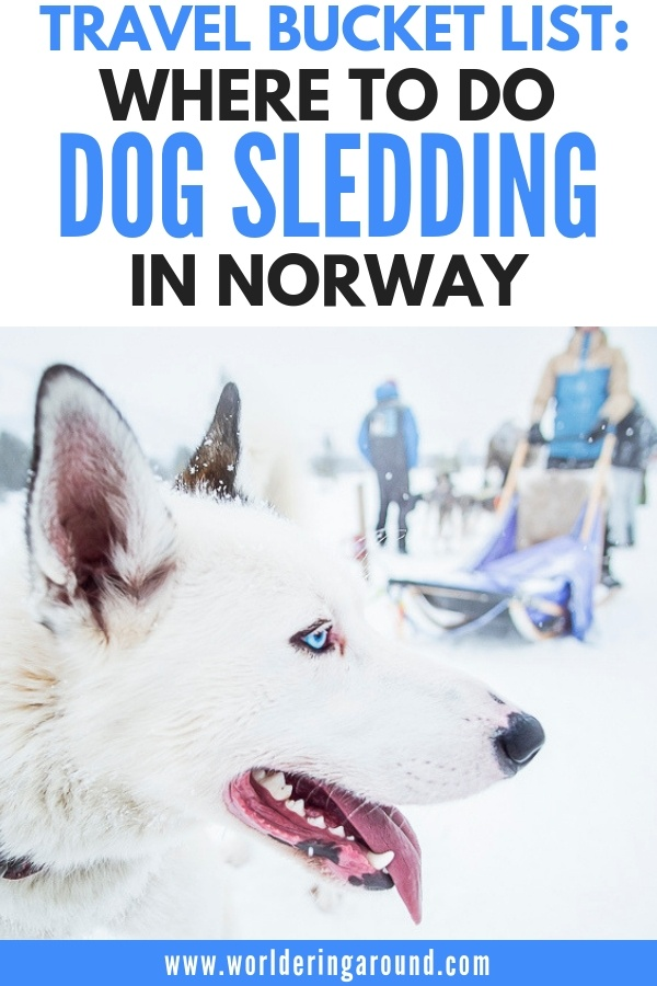Travel bucket list: where to do dog sledding in Norway, best place for dog sledding with the dogs that are cared for, where to find ethical husky tours in Norway near Oslo | Worldering Around #norway #dogsledding #travel #oslo
