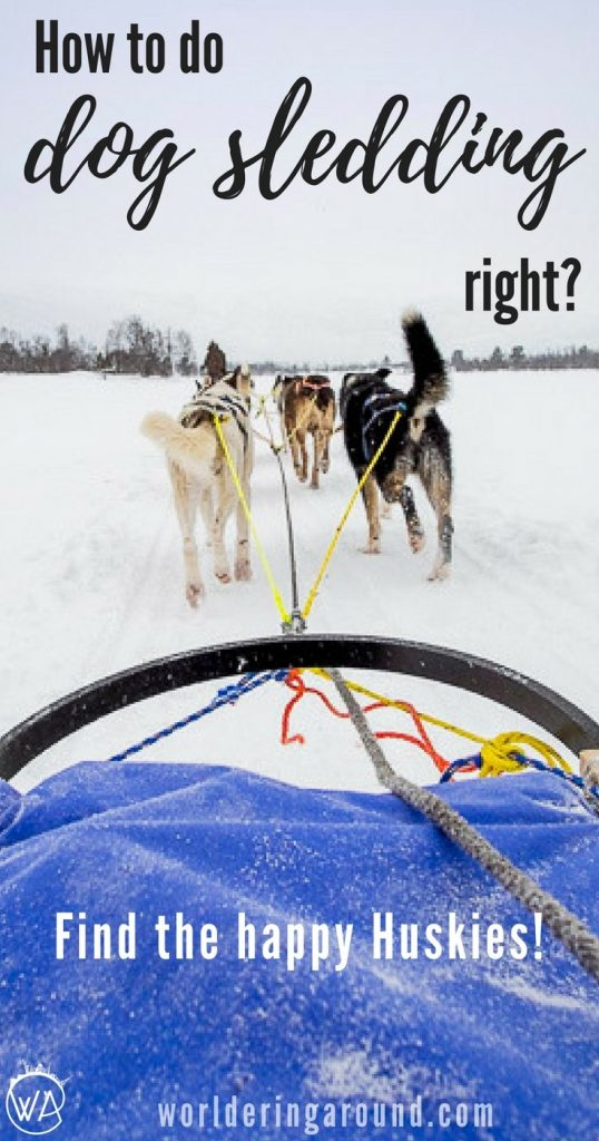 How to do the dog sledding right? Find the happy Huskies for a great Husky safari in Norway! Norway travel winter bucketlist, top things to do in Norway | Worldering around #Norway #winter
