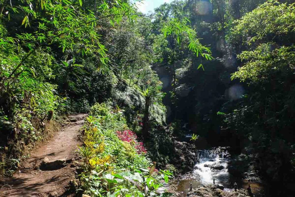 Waterfalls trek in Munduk, Bali - best places to visit in Indonesia