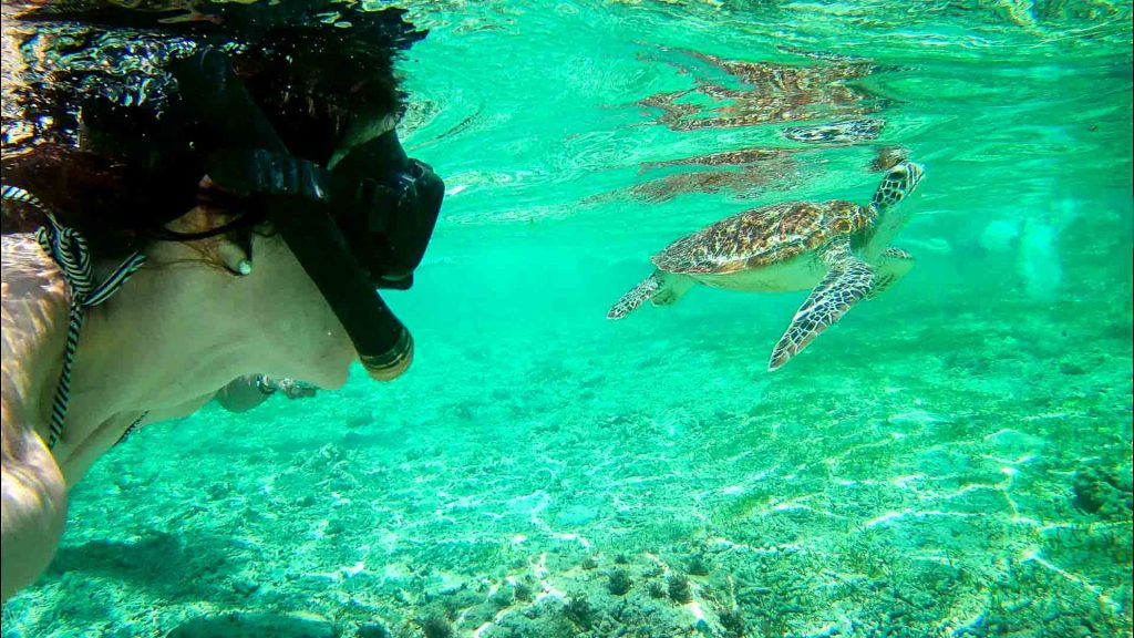 Turtle swimming, Gili Islands, Indonesia - Indonesia 10 days travel itinerary-best places to visit in Indonesia
