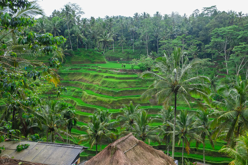 Rice terraces, Bali - Indonesia 10 days travel itinerary