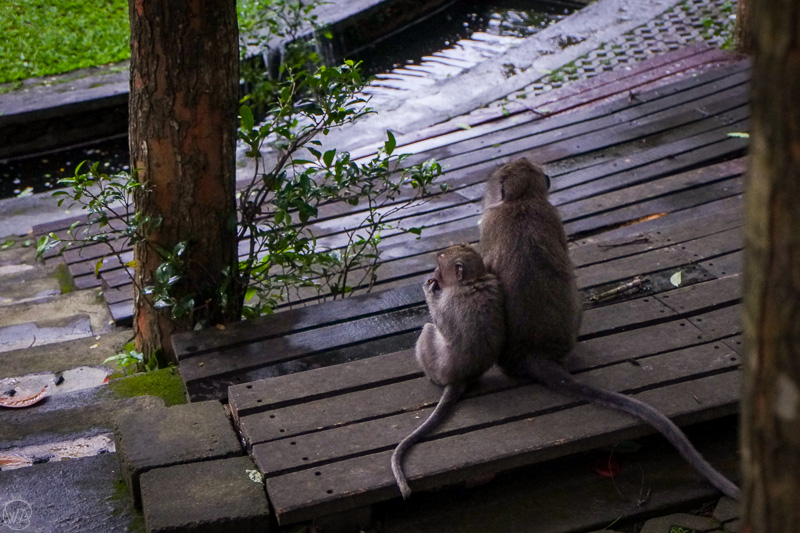Two monkeys in the Monkey Forest, Ubud, Bali Indonesia 10 days travel itinerary