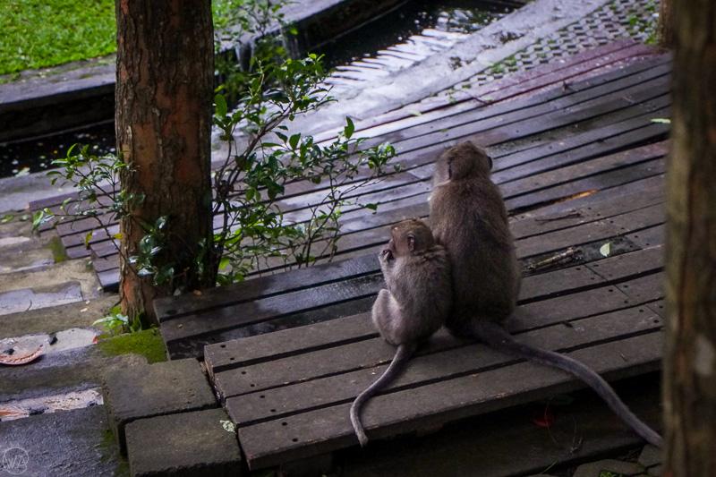 Two monkeys in the Monkey Forest, Ubud, Bali Indonesia 10 days travel itinerary