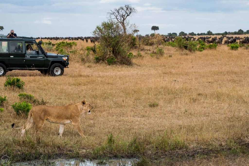 What to pack for safari in Kenya - camera with zoom lens so you can catch the lion on a photo