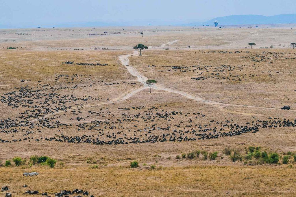 Wildebeest Great migration Masai Mara Kenya