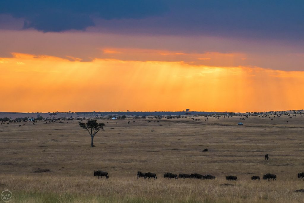 African safari animals by the sunset in Masai Mara, Kenya
