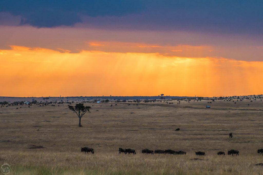 African safari animals by the sunset in Masai Mara, Kenya