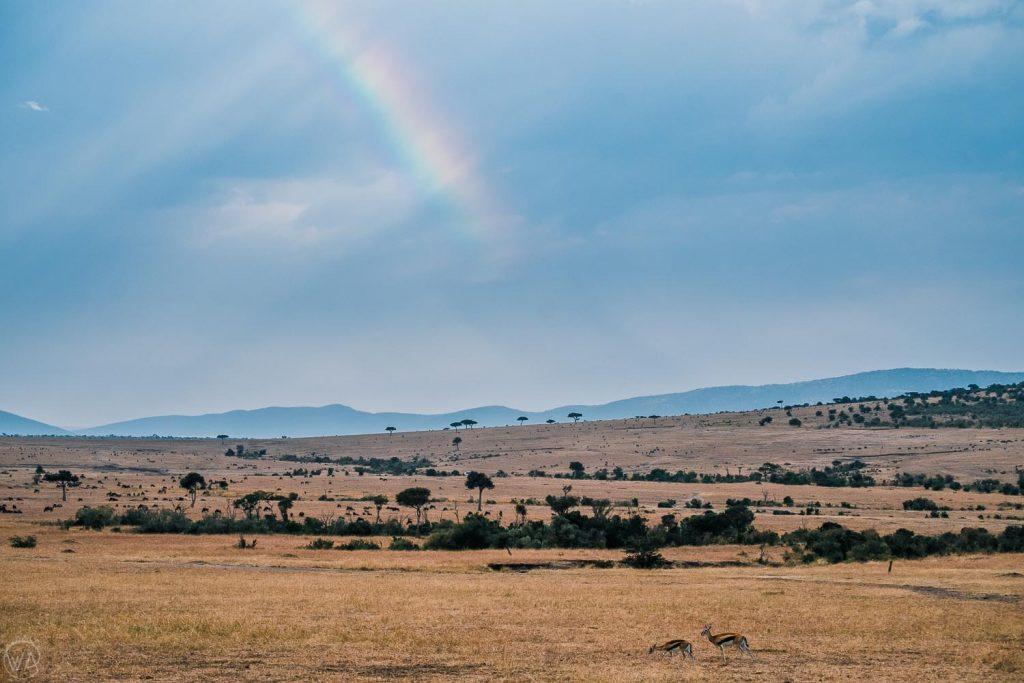 Masai mara rainbow