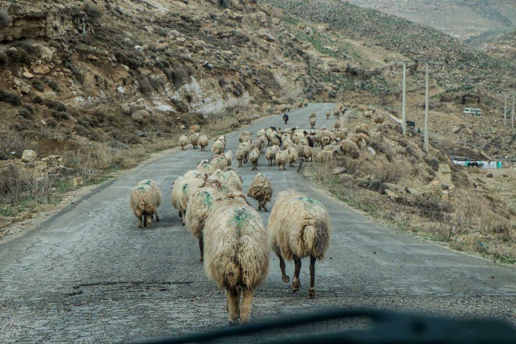 Driving in Jordan