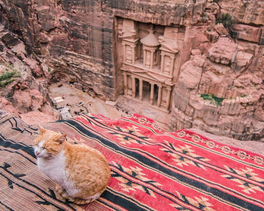 Sleepy cat in front of the Treasury in Petra, Jordan