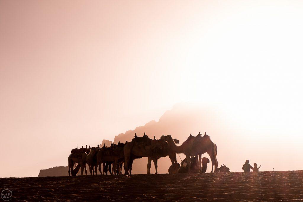 Camels humps looking like giant hearts, Wadi Rum, Jordan