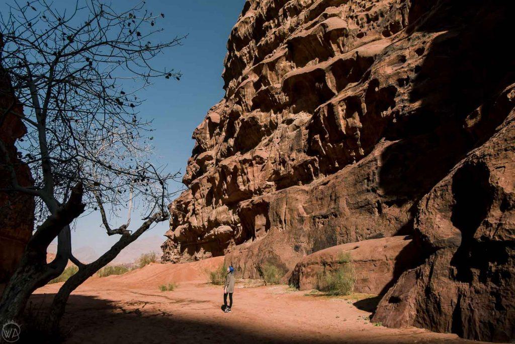 Trees in the Khazali Canyon, Wadi Rum
