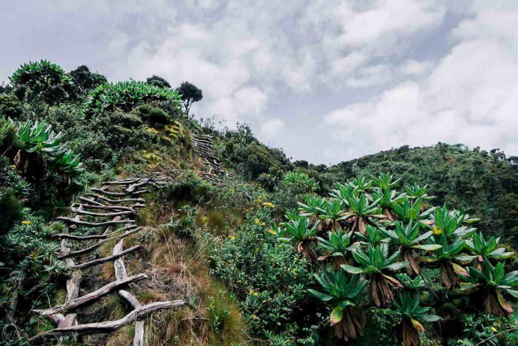 Mt. Sabyinyo volcano hike Uganda, the ladders