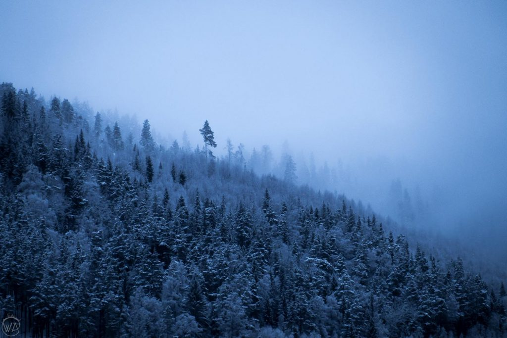Norway winter forest view