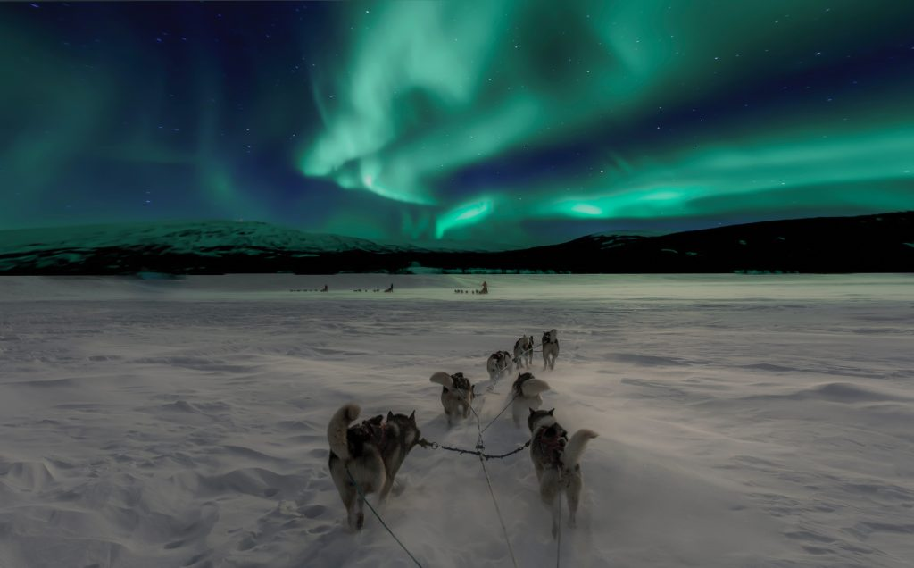 Northern Lights in Norway in winter with dog sledding