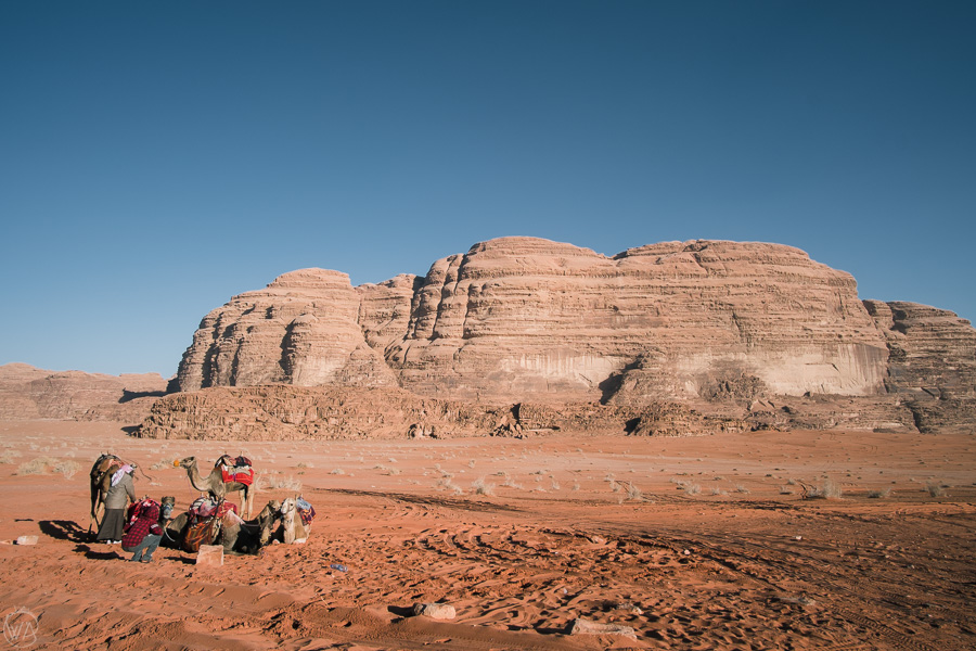 Camels are a popular mean of transport in Wadi Rum area