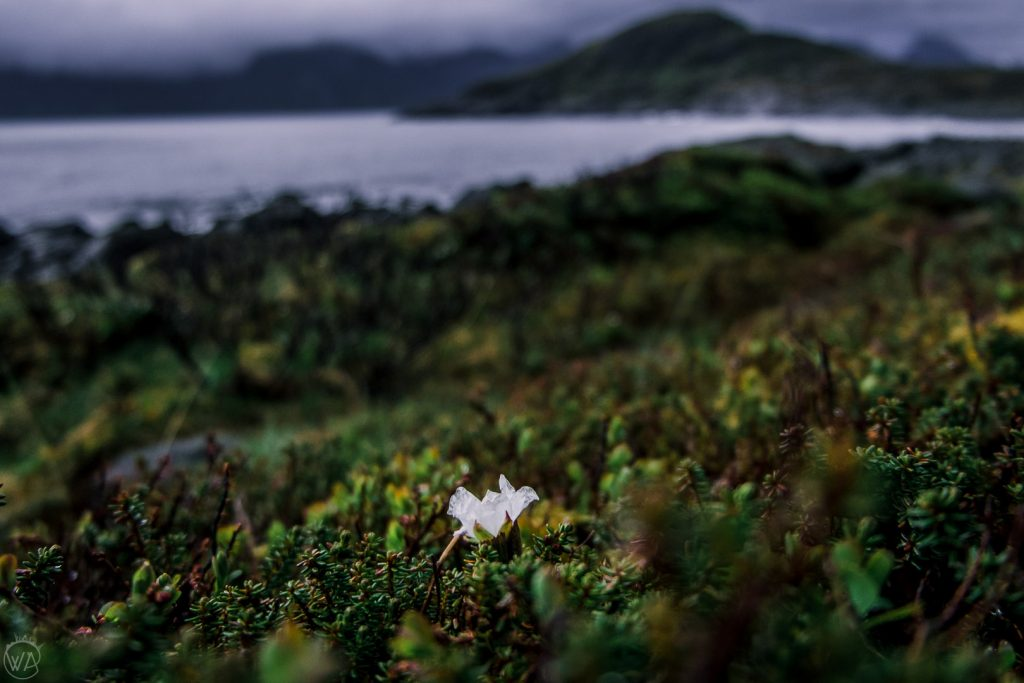 Widoki ze szlaku na Russehula, Senja, Norwegia
