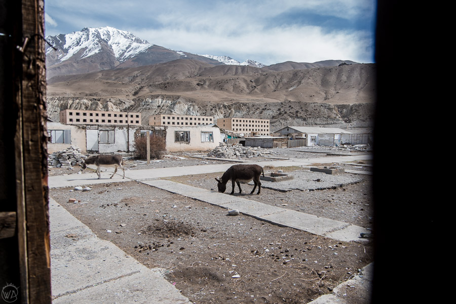 Donkeys roaming around the ruins of the Engilchek ghost town in Sary Jaz Valley, Kyrgyzstan, Tian Shan Mountains.