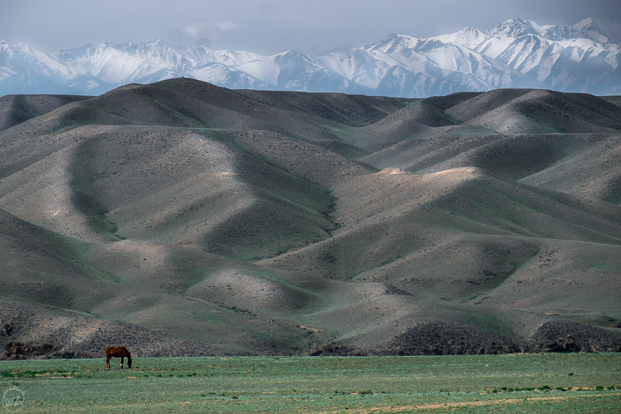 Pictures like this you can see while travelling in Central Asia - horse against the backdrop of the mountains