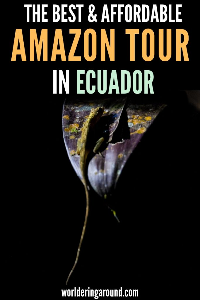 Find the best Amazon tour in Ecuador. How to choose the Ecuador Amazon tour, what Amazon animals can you see in the Amazon rainforest? How to support ecotourism in the Amazon rainforest when the Amazon rainforest is burning? The best Amazon tour from Quito. See pink dolphins, anakonda and caimans. Amazon Ecuador travel, Amazon rainforest travel | Worldering around #wildlife #ecuador #travel #amazon #SouthAmerica #rainforest #ecotourism