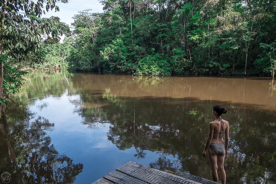 Swimming in the Amazon rainforest