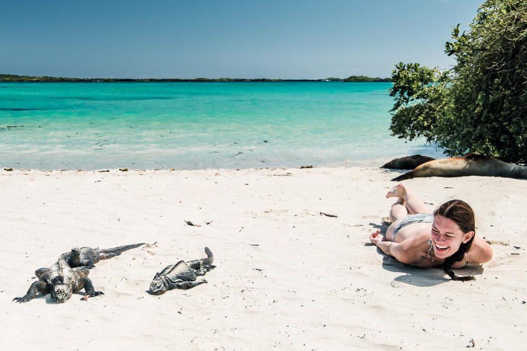 gaapagos iguanas