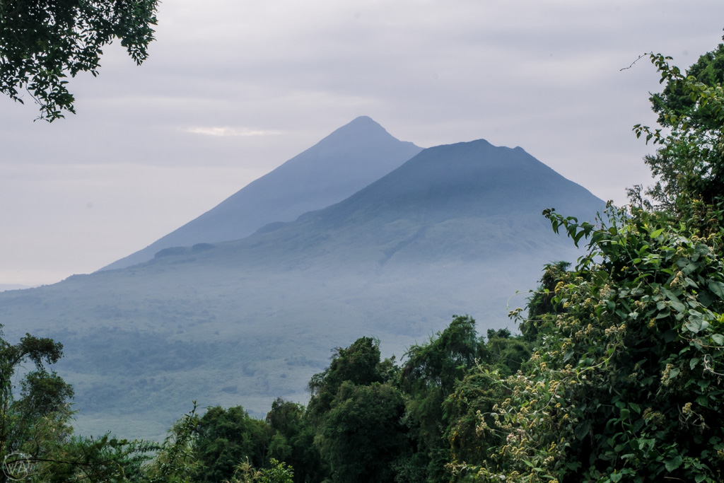 View to Virunga volcanoes from the trail of Mount Sabyinyo, hiking in Uganda