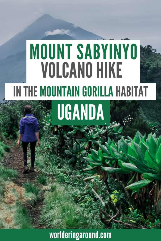 Hiking in Uganda - climb Mount Sabyinyo, one of the Virunga volcanoes in the Mgahinga Gorilla National Park, where endangered mountain gorillas live. Live the adventure and do the gorilla trekking. Stand on the border of three countries when you do volcano hiking: Uganda, Rwanda and the Democratic Republic of Congo. #uganda #volcanoes #gorillas #africa #offthebeatenpath #adventure #hiking #worlderingaround #DRC #rwanda